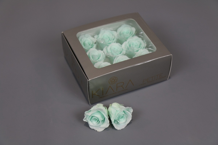 <h4>Rosa Preserved Minty Green Petite</h4>