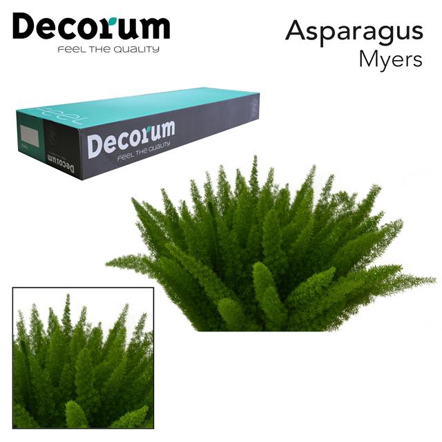 <h4>ASP myers 50cm box dc</h4>