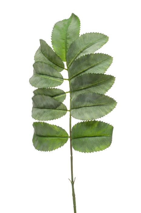 <h4>SILK MELIANTHUS SPRAY 67CM GREEN 423572</h4>