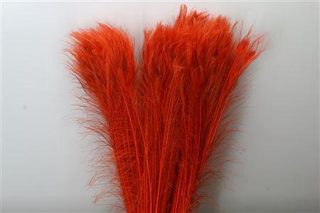 <h4>Dec Feather Peacock Orange</h4>