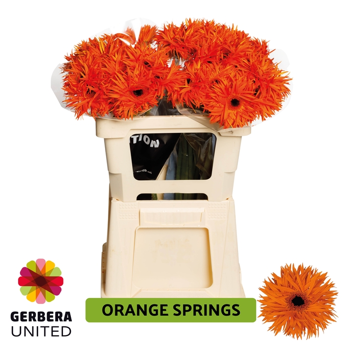<h4>GE GR Orange Springs water</h4>