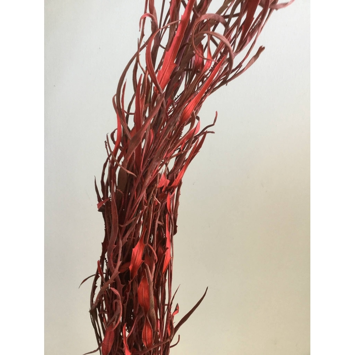 <h4>DRIED FLOWERS - GREVILLEA GEVERFD RED PER BOS</h4>