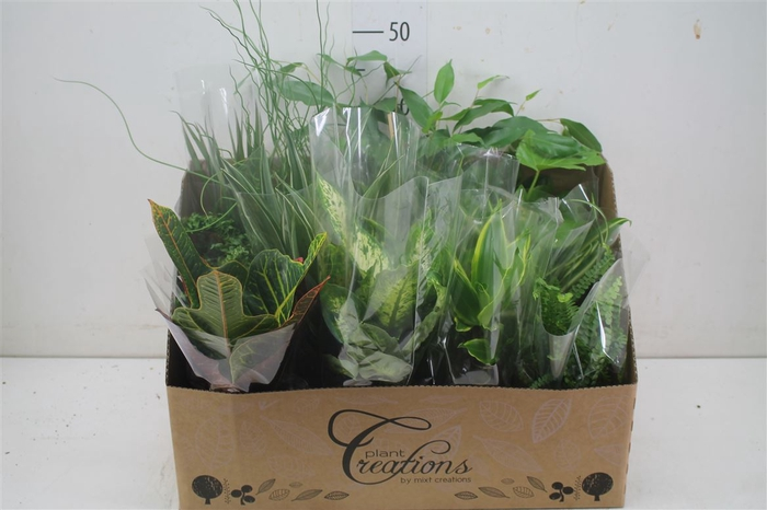 <h4>Plant Mix Middel</h4>