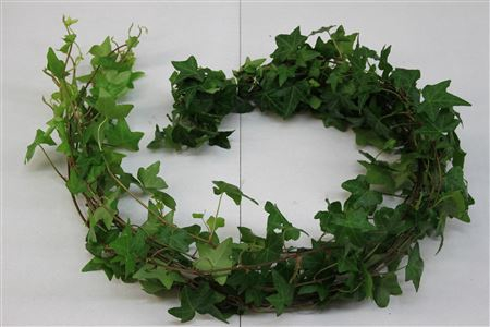 <h4>Hedera Rank Groen ( Hollands )</h4>