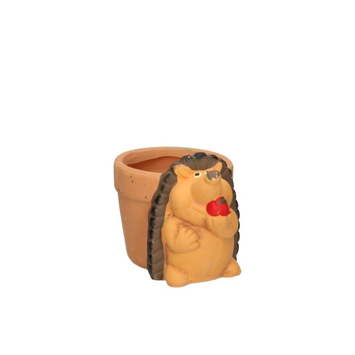 <h4>Sale Hedgehog pot d10/14*10cm</h4>