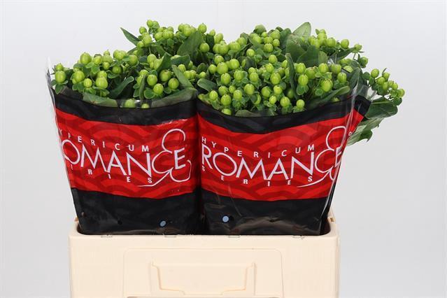 <h4>HYP LUCKY ROMANCE</h4>