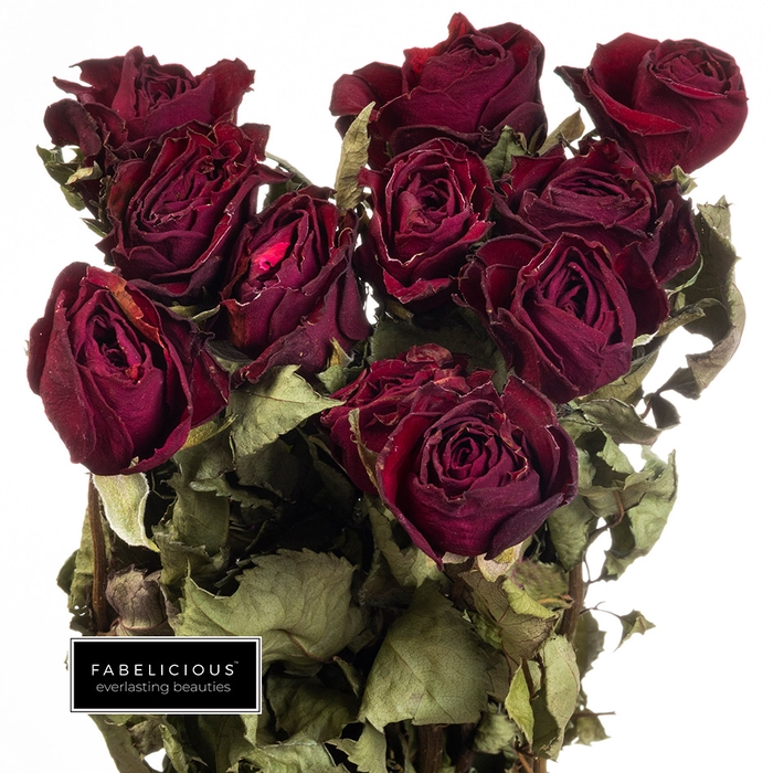 <h4>Dried Rosa grootbloemig Victoria Red</h4>