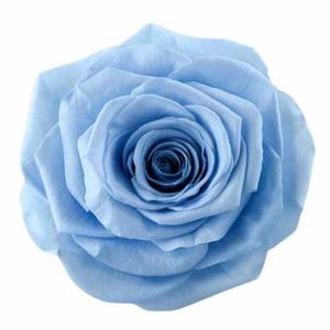 Rose Ines Sky Blue