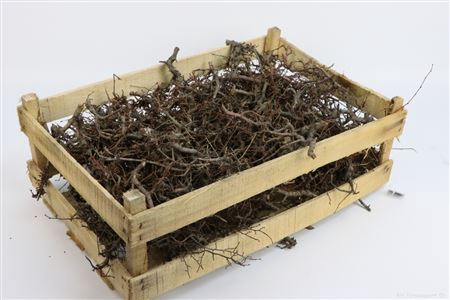 <h4>Bonsai Wood Naturel</h4>