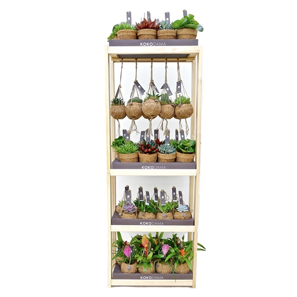 <h4>Kokodama Display Rack (incl. 40 plants)</h4>