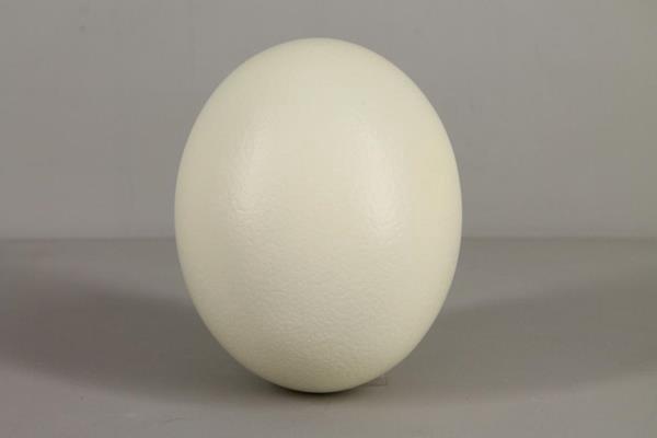 <h4>Egg Ostrich Natural</h4>