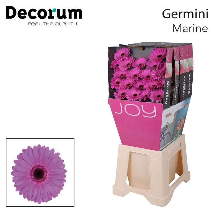 <h4>Ge Mi diamond Marine</h4>