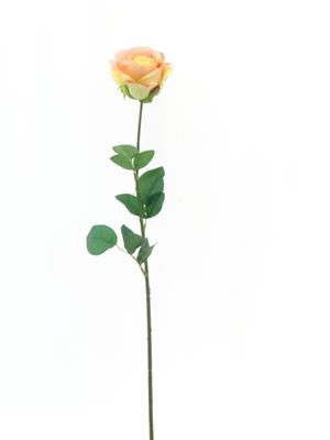 <h4>Af Rose Sco Peach</h4>