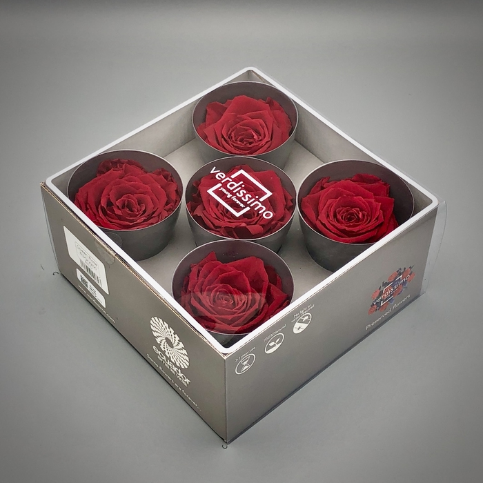 <h4>R PR Queen Red</h4>