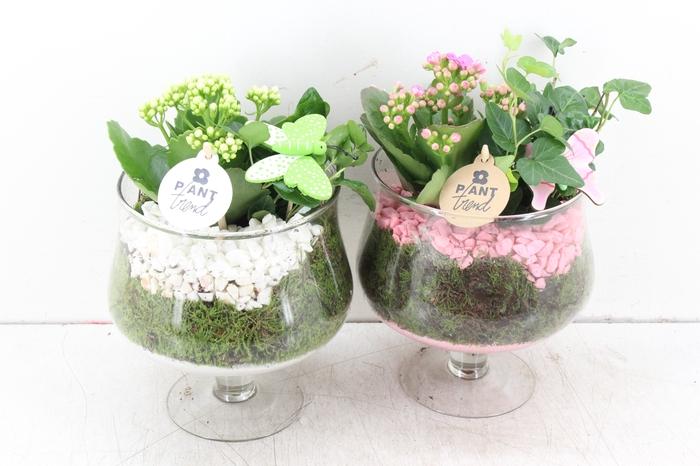 <h4>arr. PL - Glas op voet - roze/wit</h4>