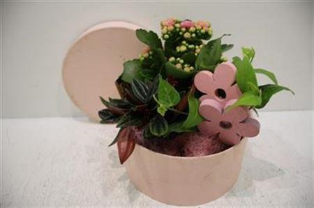 <h4>2092 Roses Box Pink</h4>