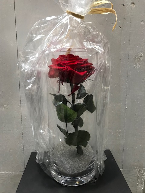 <h4>Glass XL Rose Red 25cm</h4>