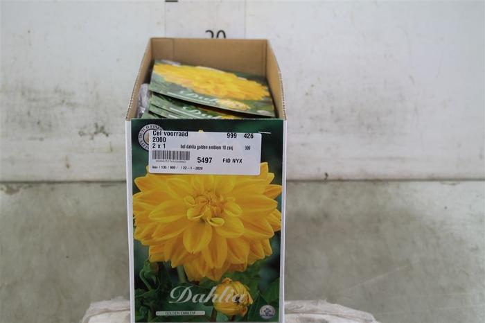 <h4>Bol Dahlia Golden Emblem 10 Zakjes X1</h4>