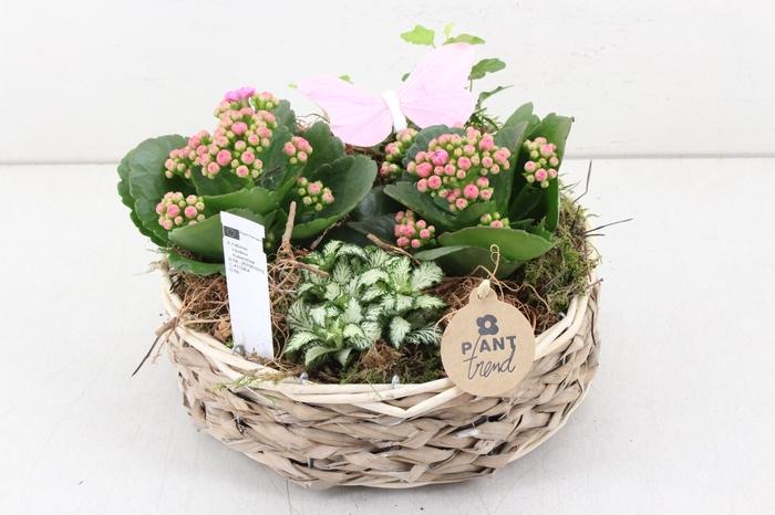 <h4>arr. PL - Tulband - roze</h4>