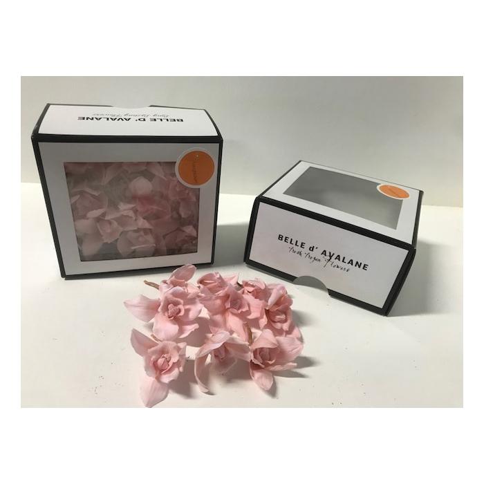 <h4>Cymbidium s roze (30)</h4>