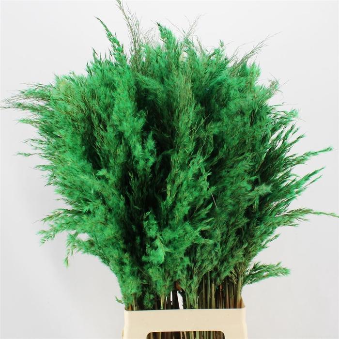 <h4>Pampas Green</h4>