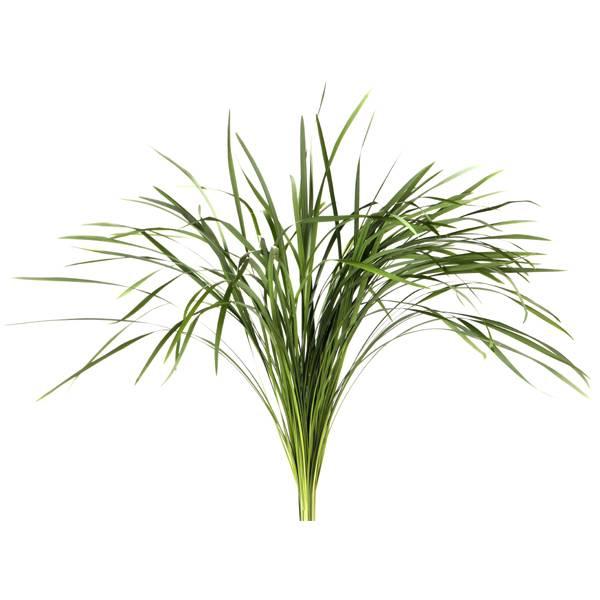 <h4>T-GRAS GROEN LONG</h4>