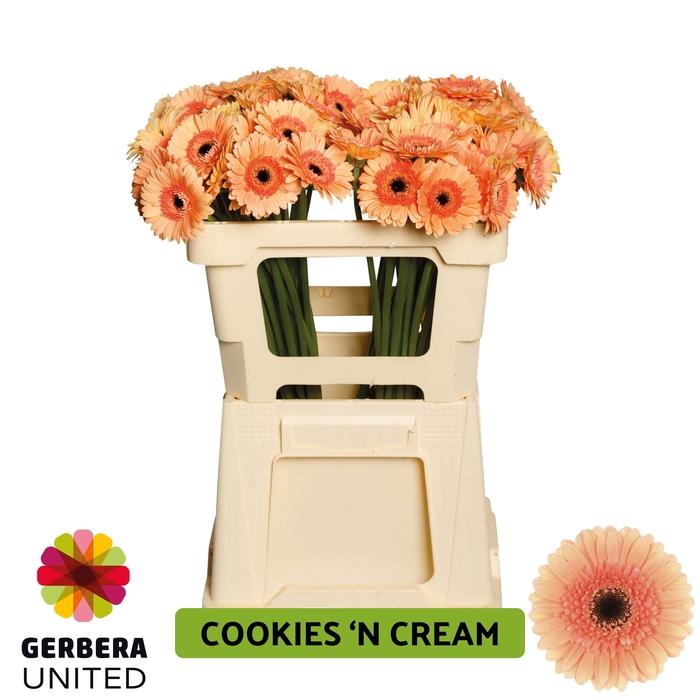 <h4>GE MI Cookie n Cream water</h4>