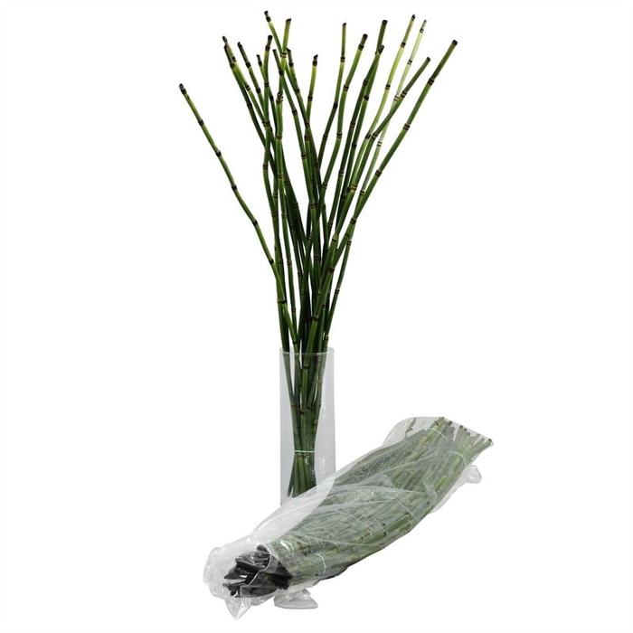 <h4>Bamboe GT Vac.</h4>