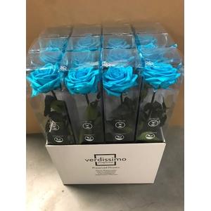 Roos op steel XL plexi 55cm turquoise