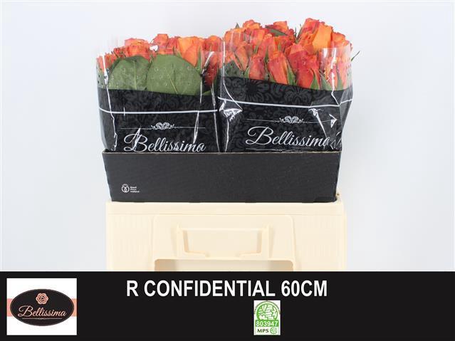 <h4>R GR CONFIDENTIAL</h4>