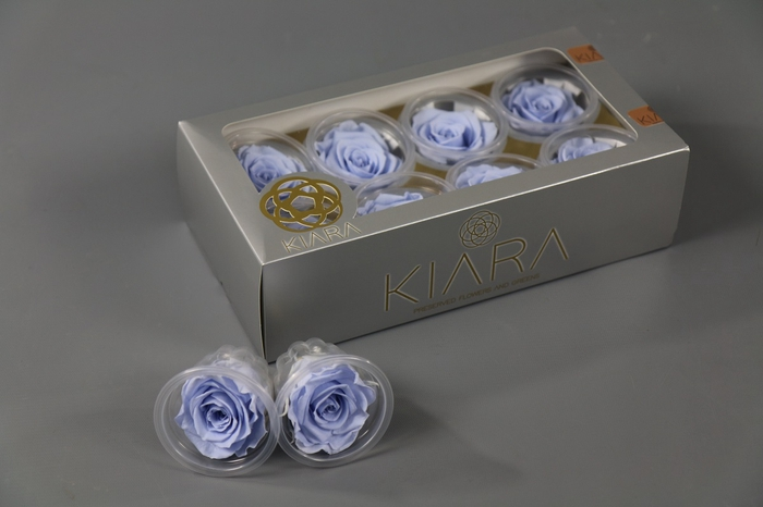 <h4>Rosa Preserved Cool Lavender Rose</h4>