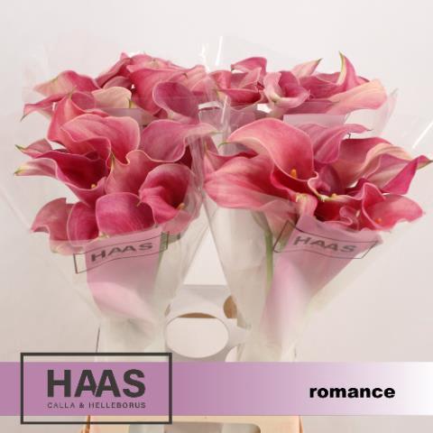 <h4>ZANT CAPT ROMANCE</h4>