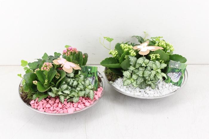 <h4>arr. PL - Glas schaal 27cm - roze/wit</h4>