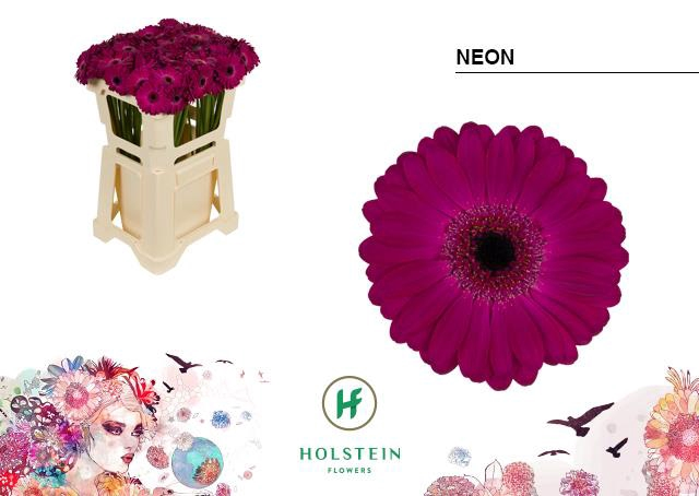 <h4>GE MI NEON</h4>