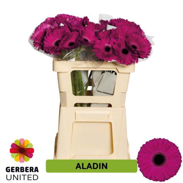 <h4>GE GR Aladin</h4>