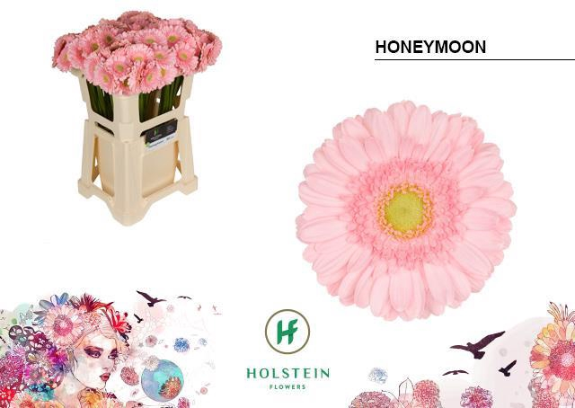 <h4>GE MI HONEYMOON</h4>