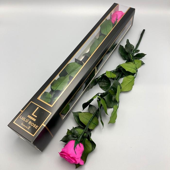 <h4>R PR Stem Lulu Pink</h4>