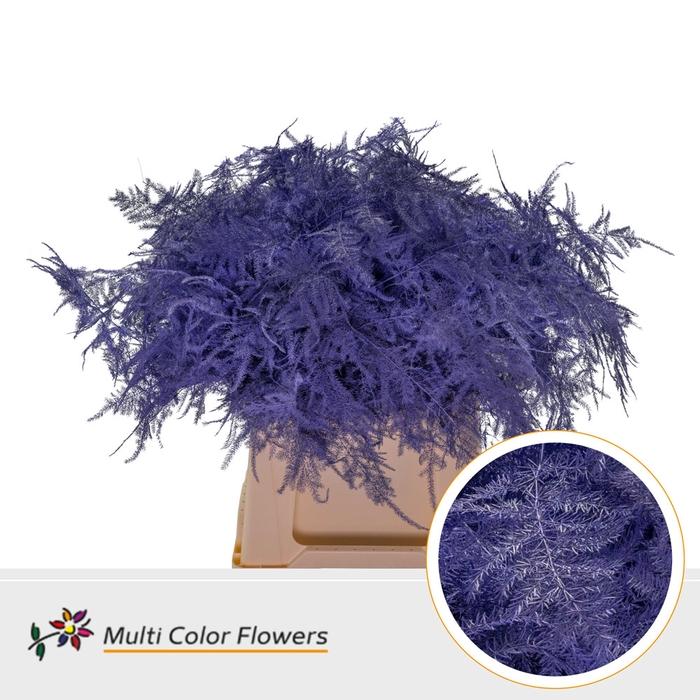 <h4>Asparagus 1e veren gekleurd Violet donker</h4>
