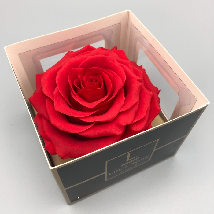 <h4>R PR XXL Lulu Red</h4>