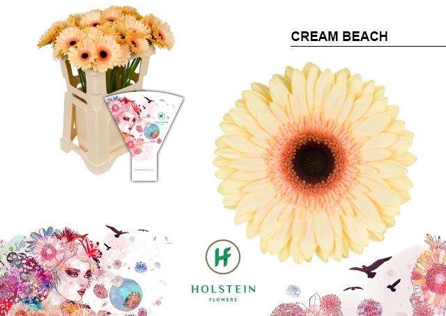 <h4>GE GR hoes Cream Beach</h4>