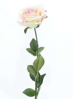 <h4>Af Rose Sco Cream Pink</h4>