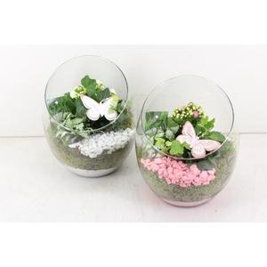 arr. PL - Glas spider - roze/wit