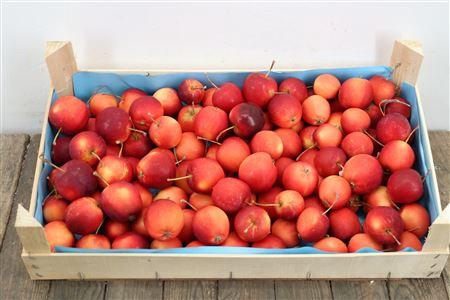<h4>Appels Rood P Kist</h4>