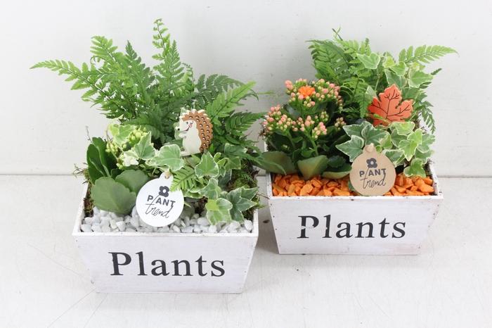 <h4>arr. PL - Hout kist Plants - oranje/wit</h4>
