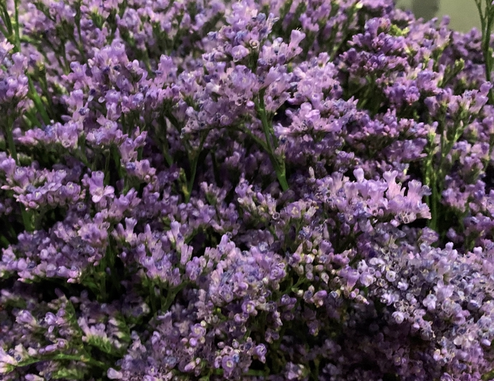 <h4>Latifolium Purple</h4>