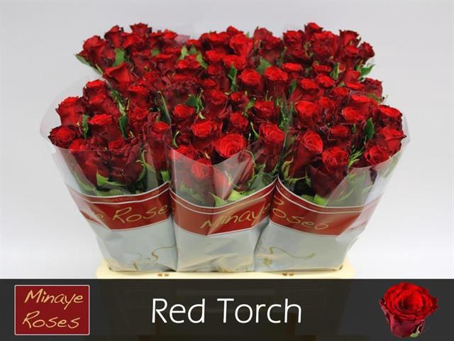 <h4>R GR RED TORCH</h4>