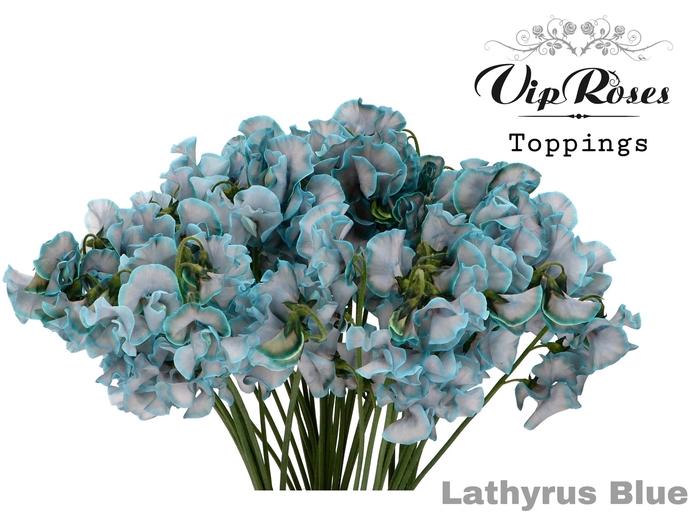 LATHYR BLUE