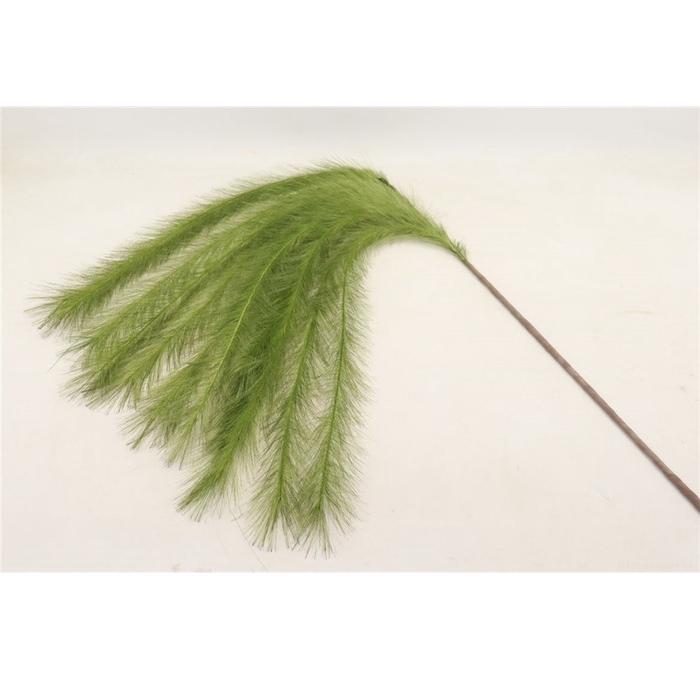 <h4>Silk Plume Panicle 75cm</h4>