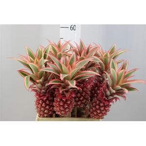 Ananas Medium