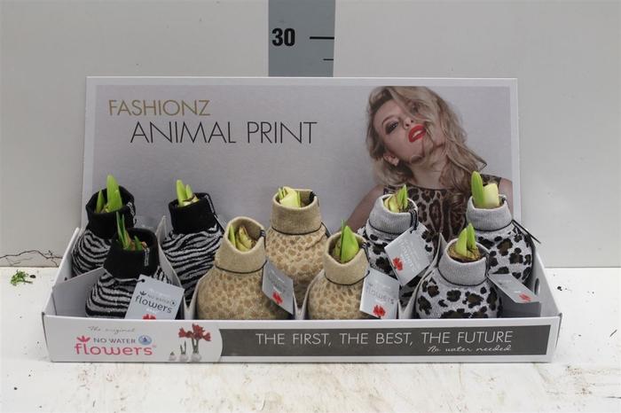 <h4>Hippeastrum Fashionz Animal No Water</h4>